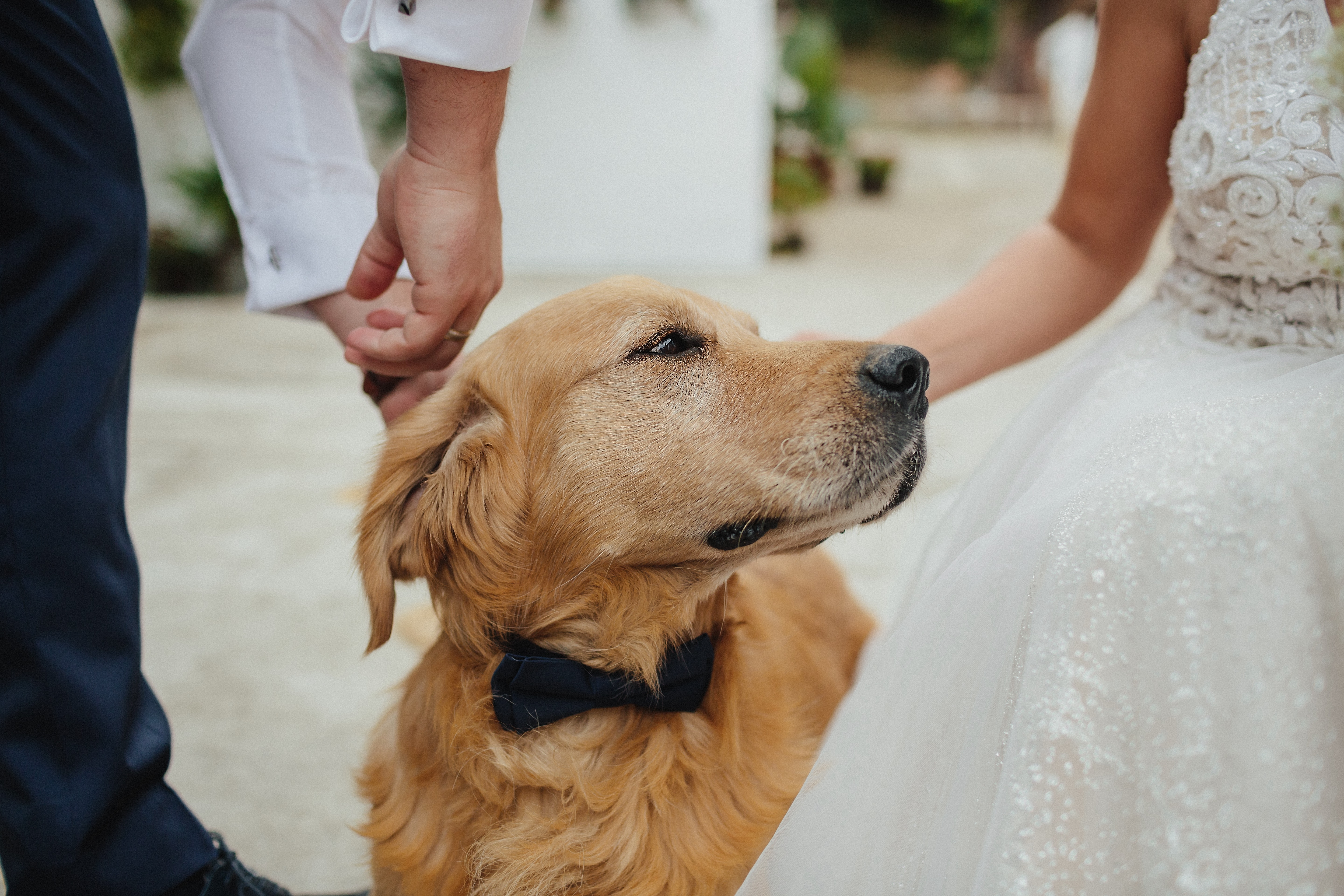 Pet expert reveals how to train your dog to be the perfect ring bearer